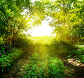 Path out of the deep forest in sun Royalty Free Stock Photography