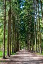 Path in the park in spring time Royalty Free Stock Photo