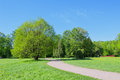 Path in park in the spring and trees Stock Photography