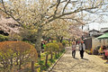 Path of phylosophy in kyoto april tourists visit philosophy on april japan it is a pedestrian that follows a cherry tree lined Stock Images
