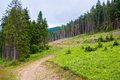 Path in the pine forest Stock Images