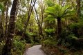 Path through rain forest in Glacier Country Royalty Free Stock Photos