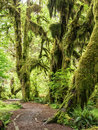 Path through the rain forest Royalty Free Stock Photo