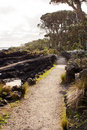 Path on Rangitoto Island Royalty Free Stock Photo