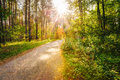 Path Road Way Pathway On Sunny Day In Summer Sunny Forest at Sun Royalty Free Stock Photo