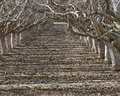 Path Between Rows Of Dormant F...