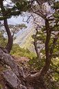 Path through Samaria gorge, island of Crete Stock Photo