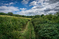 Path through shrubbery at newland corner on a summers day Royalty Free Stock Photos