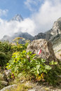 Path sign on italian alps italy monviso mountain a close to the top of one of the most scenic mountain of Stock Photos