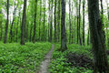 Path in spring forest. Royalty Free Stock Photo