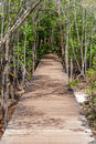 Path in spring green forest boardwalk Royalty Free Stock Photography