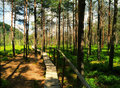 Path in a swamp wooden the sunny day Stock Photo