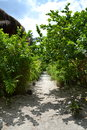 Path in tailand on lipe island Royalty Free Stock Photos