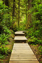 Path in temperate rainforest Royalty Free Stock Photography