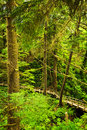 Path in temperate rainforest Stock Photo