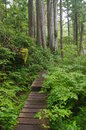 Path in temperate rainforest hiking pacific northwest Stock Image