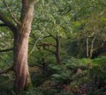 Path though dark green ancient dense forest with old twisted woodland trees and foliage