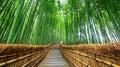 Path to bamboo forest, Arashiyama, Kyoto, Japan Royalty Free Stock Photo
