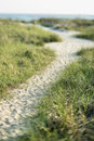 Path to beach Stock Photography