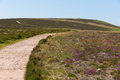 Path to dunkery hill the highest point on exmoor near to minehead somerset england uk in summer beacon Royalty Free Stock Photo