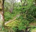 Path to heaven Royalty Free Stock Photo