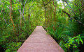 Path to the jungle trang thailand wooden bridge tha pom mangrove forest krabi Stock Images