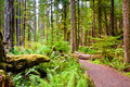 Path to Marymere Falls Royalty Free Stock Photo