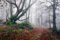 Path to mysterious and foggy forest Royalty Free Stock Photo