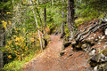 Path to Nairn Falls Royalty Free Stock Photo
