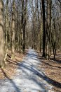 Footpath in the spring forest
