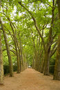 Path in the trees Royalty Free Stock Photos