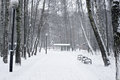 Path between trees covered with snow in park during heavy snowfall Stock Photography