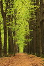 Title: Path with trees with green spring leaves