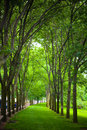 A path through the trees planted in rows create beautiful in park these are found in national park near st louis gateway Royalty Free Stock Photography