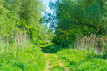 Path through trees in wetland in spring Royalty Free Stock Photo