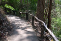 Path in tropical forest Royalty Free Stock Photo