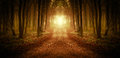 Path trough a magical forest at sunrise Royalty Free Stock Photo