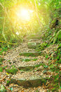 Path way in forest tropical Stock Images