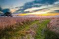 Path through wild countryside rural trail grassy field on lakeside during sunset leading to succes Royalty Free Stock Photography