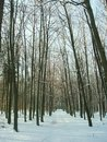 Path in winter forest Stock Images