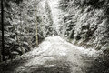 Path in winter forest dramatic scenery Stock Photos