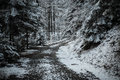 Path in winter forest rocky dramatic scenery Royalty Free Stock Image