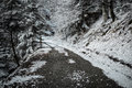 Path in winter forest rocky dramatic scenery Stock Image