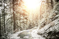 Path in winter forest at sunset Royalty Free Stock Image