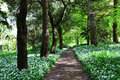 Path in wooded area a devon u k Stock Photo