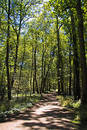 Path in woods Stock Image