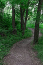 The path in the woods Royalty Free Stock Photo