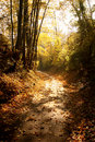 Path through woods in fall Royalty Free Stock Photo