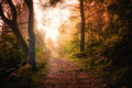 Path through the woods and light rays as they break through fog Royalty Free Stock Photo