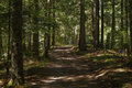 Path in the woods Royalty Free Stock Photo